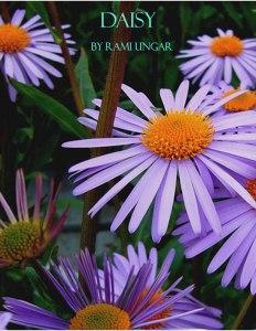 daisy-cover
